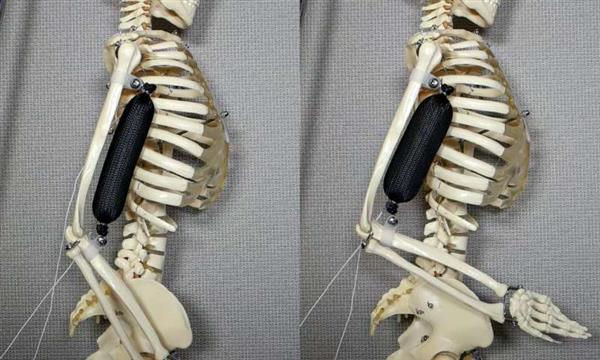 哥伦比亚大学科学家开发出比人体肌肉强三倍的3D打印合成软肌肉