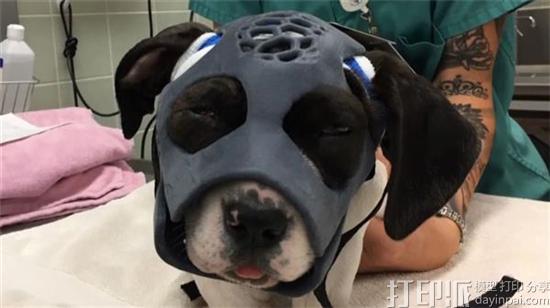 美国兽医医院为面部严重受伤的小狗制作亚洲通官网注册面具 帮其恢复健康